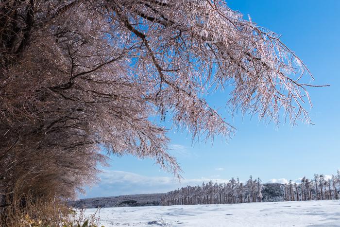 20140406-Canon EOS 6DIMG_2446