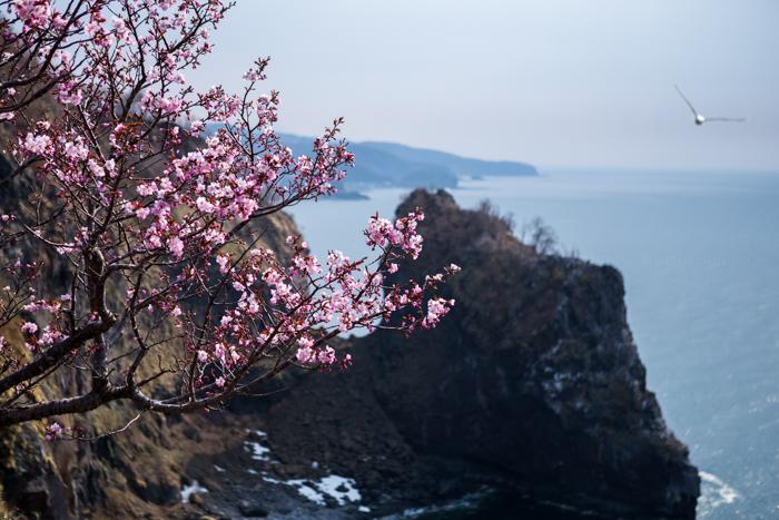 20140508-Canon EOS 6DIMG_0154